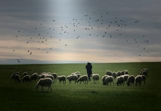 pastore-con-gregge